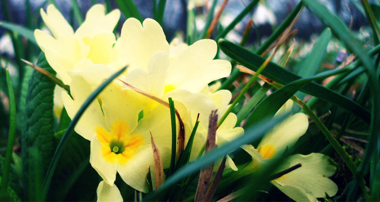 You are currently viewing Evening Primrose Oil. The most wonderful oil around.